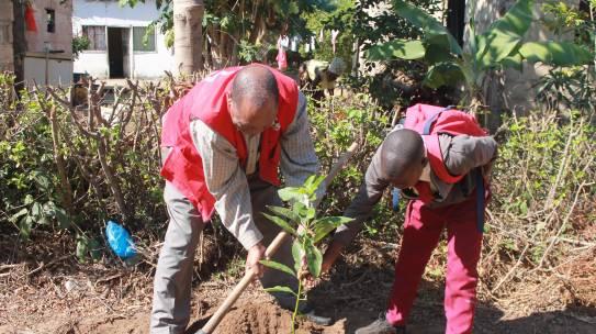 Plantio de árvores em comemoração ao dia Mundial da Cruz Vermelha